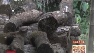 生活达人—隐藏森林荒野十年的CEO