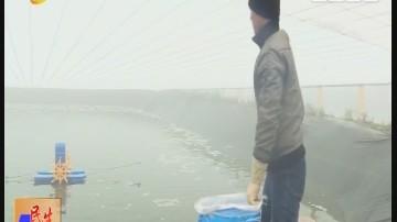 阳江:阳东大沟:大鹏养殖让对虾不怕冷