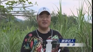 [2018-01-28]潮流假期:游中越边关 赏跨国风情6