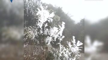 南方也有北国风光 银装素裹雾淞迷人