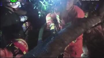 梅州:大树砸中两高三学生一死一伤
