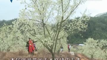 广宁:千株山楂花 怒放醉游人