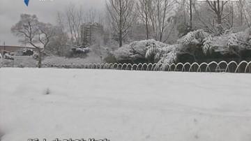 上海:银装素裹 雪景美如画