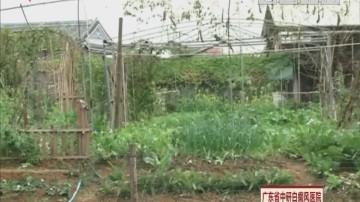 美丽乡镇新春睩:共享菜园篇