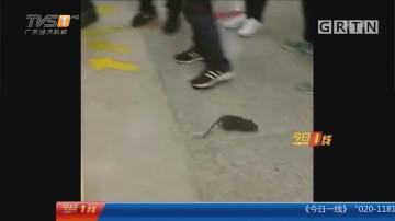 广州:地铁站台人鼠追逐战 引发尖叫连连