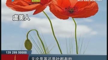 [2018-03-14]小强热线:亚艺公园惊现罂粟花?原来是虞美人