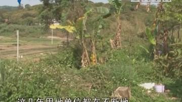 阳江:无证填土 影响周边耕作