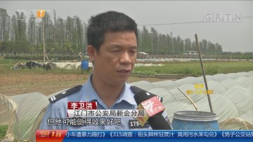 江门:菜农使用禁用农药 被逮捕