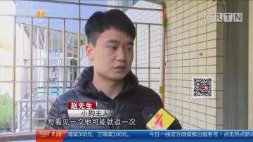 深圳:疑不满小狗家门口撒尿 竟残忍扔下楼