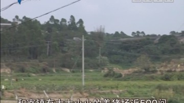 廉江:猪场严重污染河涌 扶贫也要重环保