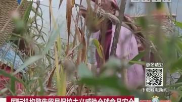 国际机构警告贸易保护主义威胁全球食品安全