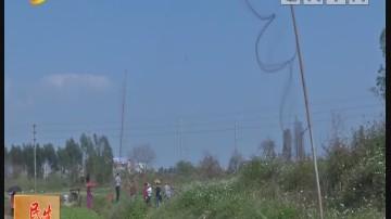 阳江:护鸟在行动 拆除非法捕鸟网60多张