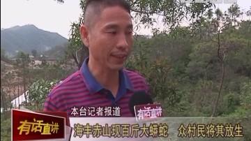 汕尾:海丰赤山现百斤大蟒蛇 众村民将其放生