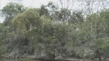 15年耗尽一生积蓄 鹭鸟天堂终成型