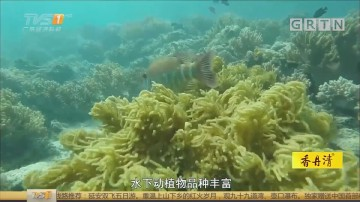 [HD][2018-04-05]一起旅游吧:马穆迪岛