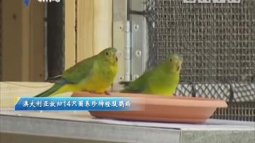澳大利亚放归14只圈养珍稀橙腹鹦鹉