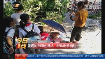 东莞南城:景观树倒砸伤路人 街坊出手相助