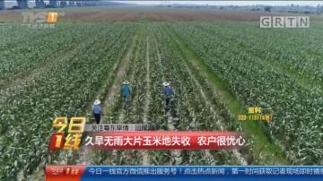 关注粤东旱情:汕尾海丰 久旱无雨大片玉米地失收 农户很忧心