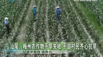 汕尾、梅州农作物干旱失收 干部村民齐心抗旱