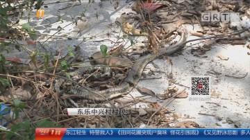 江门开平:村庄经常蛇出没 村民心惊惊
