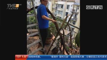 """东莞东城:下水管扯出""""巨蟒"""" 身长十八米"""