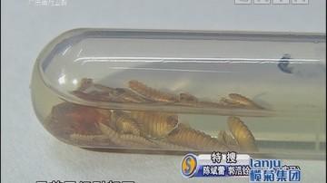 """全城悬赏抓虫 """"木虱王""""一只8元(三)"""