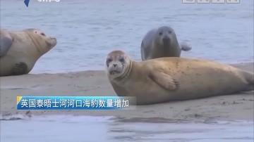 英国泰晤士河河口海豹数量增加