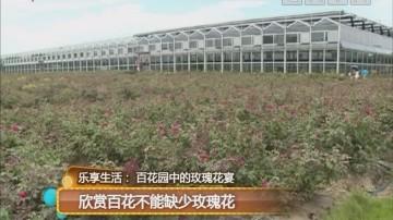 乐享生活:百花园中的玫瑰花宴 欣赏百花不能缺少玫瑰花