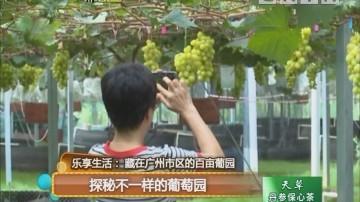 乐享生活:藏在广州市区的百亩葡园 探秘不一样的葡萄园