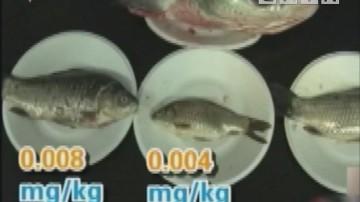 健康生活:鸡头和鱼头还能吃吗 实验检测鱼头重金属是否超标