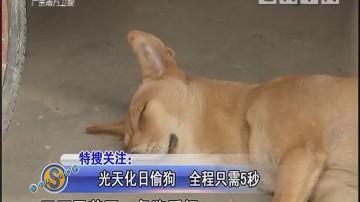 光天化日偷狗 全程只需5秒