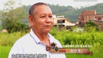 [2018-08-06]岭南风情画