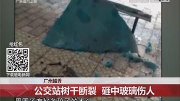 广州越秀:公交站树干断裂 砸中玻璃伤人