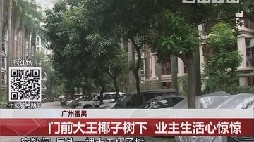 广州番禺:门前大王椰子树下 业主生活心惊惊