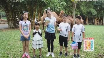 [2018-09-08]动物笑当家