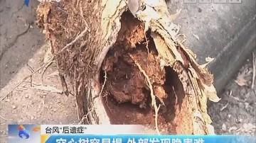 """台风""""后遗症"""":空心树容易塌 外部发现隐患难"""