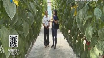 [2018-09-10]摇钱树:高新无土栽培 长春农博会