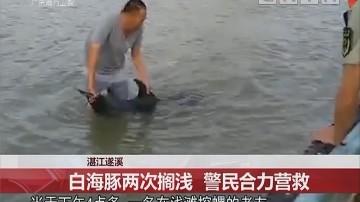 湛江遂溪:白海豚两次搁浅 警民合力营救