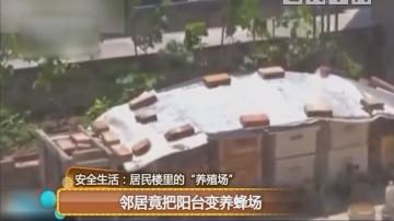 邻居竟把阳台变养蜂场