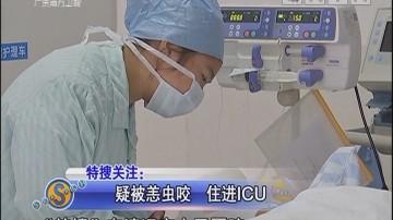 疑被恙虫咬 住进ICU