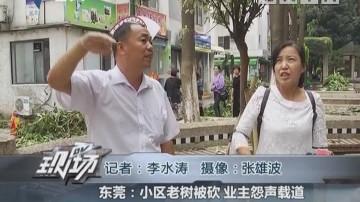 东莞:小区老树被砍 业主怨声载道