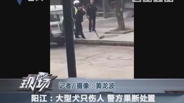 阳江:大型犬只伤人 警方果断处置