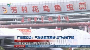 广州花交会:气候适宜花期好 兰花价格下降