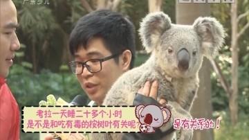[2019-01-05]动物笑当家