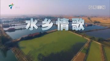 [HD][2019-01-14]文化珠江:水乡情歌