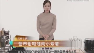 营养粗粮越南小紫薯