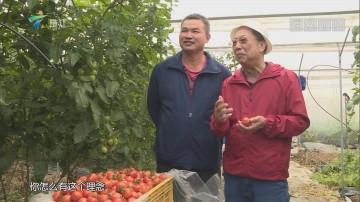 [HD][2019-01-14]摇钱树:益生菌种出优质菜