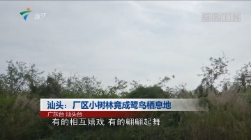 汕头:厂区小树林竟成鹭鸟栖息地