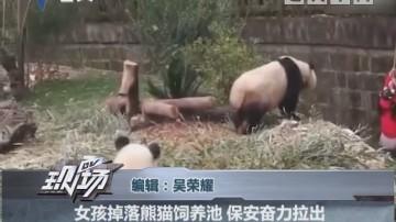 女孩掉落熊猫饲养池 保安奋力拉出