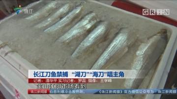 """长江刀鱼禁捕 """"湖刀""""""""海刀""""唱主角"""